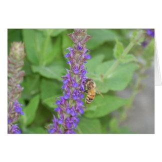 Cartão Abelha em Salvia Officinalis