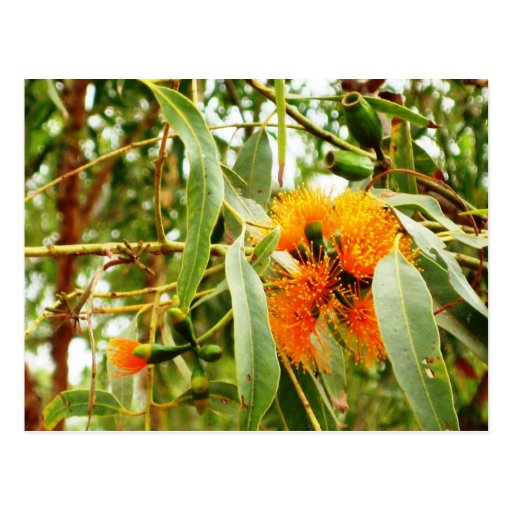 Cartão alaranjado da flor cartão postal