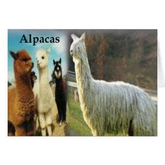 Cartão Alpaca