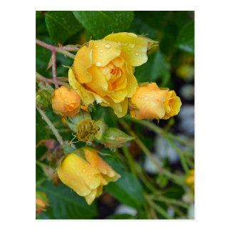 Cartão amarelo do impressão floral dos rosas do