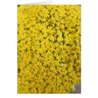Cartão Amarelo do ouro da flor do Yarrow