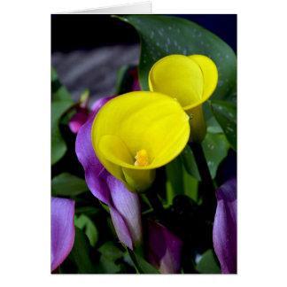 Cartão amarelo e roxo dos lírios de calla