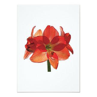 Cartão Amaryllis alaranjado de Hippeastrum