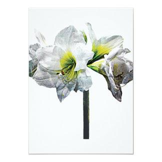 Cartão Amaryllis branco bonito