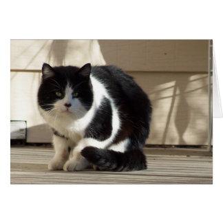 Cartão Aniversário, gato preto do branco de N
