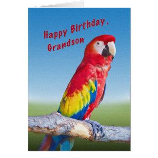 Cartão Aniversário, neto, papagaio do Macaw