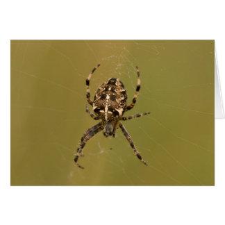 Cartão aranha do Esfera-tecelão