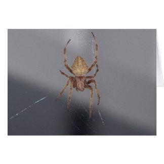 Cartão Aranha do tecelão da esfera do jardim