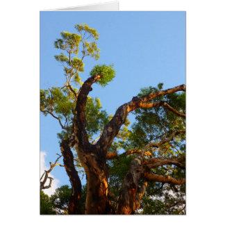 Cartão Árvore de eucalipto