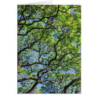 Cartão Árvore de Monkeypod