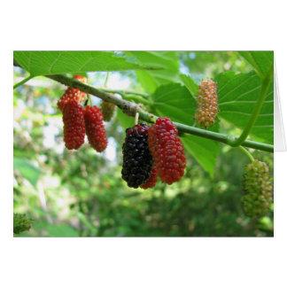 Cartão Árvore de Mulberry
