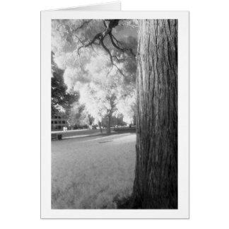 Cartão Árvore infravermelha com beira