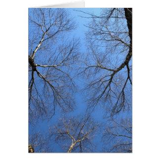 Cartão Árvores 1