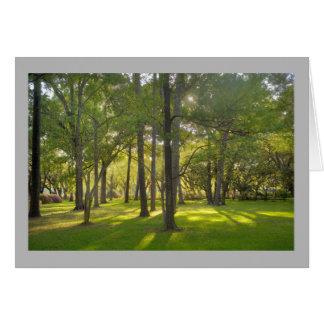 Cartão Árvores de grama ensolaradas do primavera da