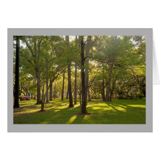 Cartão Árvores de grama ensolaradas mornas do primavera