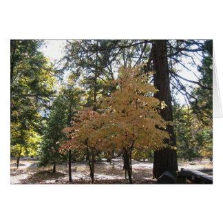 Cartão Árvores de Yosemite
