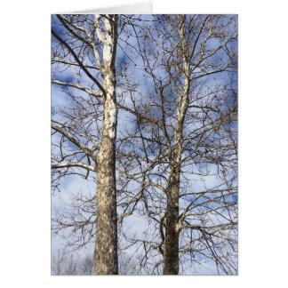 Cartão Árvores do sicômoro em um céu do inverno ---