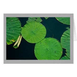 Cartão As almofadas de lírio da paisagem 31 fecham-se