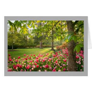 Cartão As tulipas vermelhas & cor-de-rosa são jarda