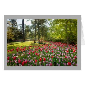 Cartão As tulipas vermelhas e cor-de-rosa são jardim da