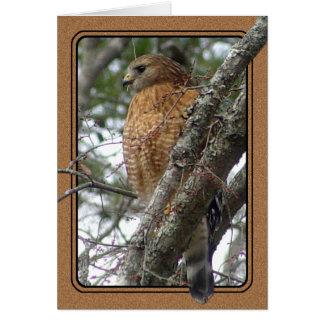 Cartão atado vermelho do falcão