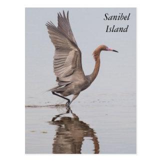 Cartão avermelhado do Egret de Sanibel