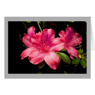 Cartão Azálea 32 três flores do vermelho rico