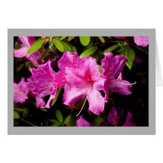 Cartão Azálea 34 três profundos - flores & dewdrops