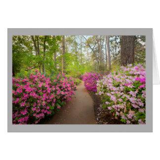 Cartão Azáleas cor-de-rosa ao lado de um trajeto através