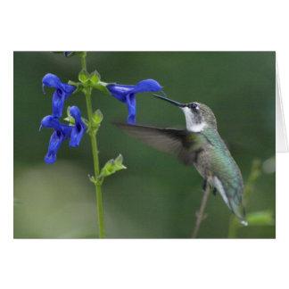 Cartão Azul 2 da safira do salvia do pássaro do zumbido