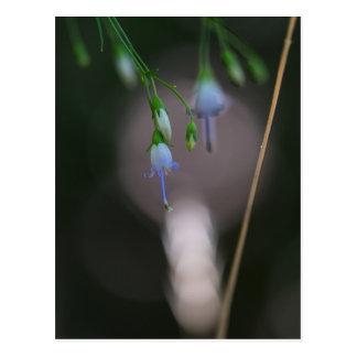 Cartão azul do Wildflower do Bellflower apalaches Cartão Postal