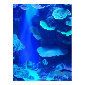 Cartão azul elétrico dos peixes cartão postal
