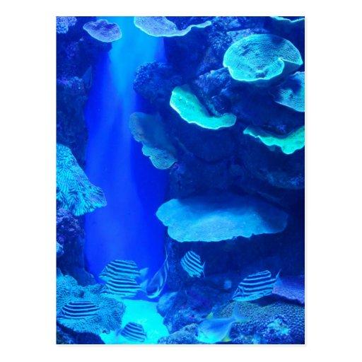 Cartão azul elétrico dos peixes cartao postal