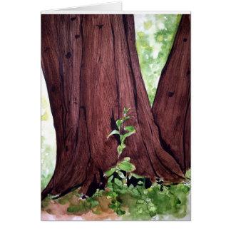 Cartão Beleza do cedro