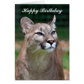 Cartão bonito do feliz aniversario da foto do puma