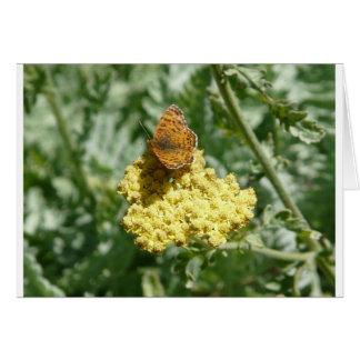 Cartão borboleta no yarrow