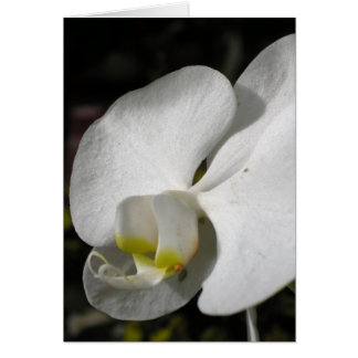 Cartão branco de seda da orquídea