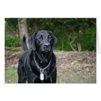 Cartão Calibre - Labrador preto