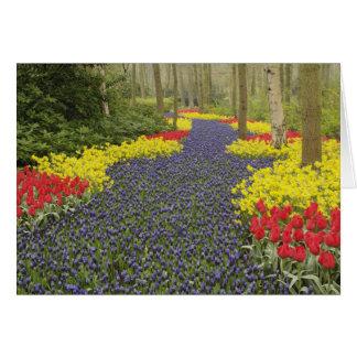 Cartão Caminho do jacinto de uva, daffodils, e