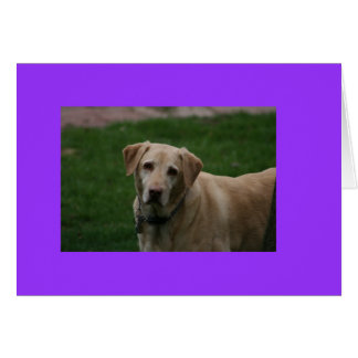 Cartão Cão de Dewey