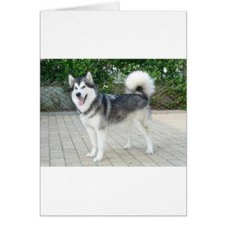 Cartão Cão de filhote de cachorro do Malamute do Alasca