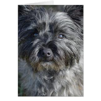 Cartão Cão de Terrier de monte de pedras