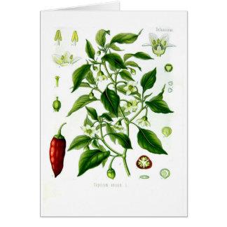 Cartão Capsicum ânuo (pimenta de caiena)