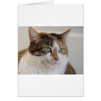 Cartão Cara do gato de gato malhado da chita