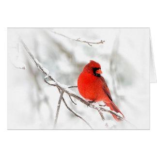 Cartão Cardeal vermelho (cartões de nota)