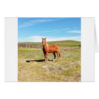 Cartão Cavalo na frente de um vinhedo de Napa