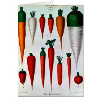Cartão Cenouras