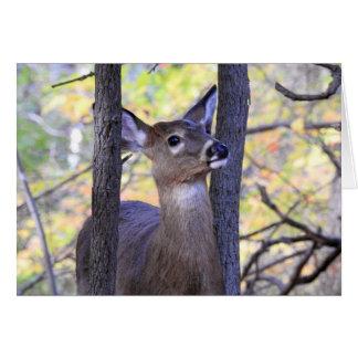 Cartão Cervos nas madeiras/eu te amo Deerly