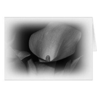 Cartão cinzento do lírio de Calla