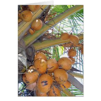 Cartão Cocos havaianos